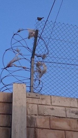 A bird on a wire at Qalandia [Credit: EAPPI/J.Fisher]