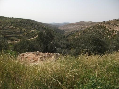 The ancient terraces of Al-Makhrour Credit EAPPI  ERStrachan