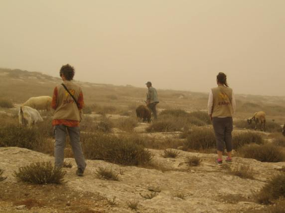 EAs accompanying shepherds during a dust storm (Photo: EAPPI/E.Brightwell]