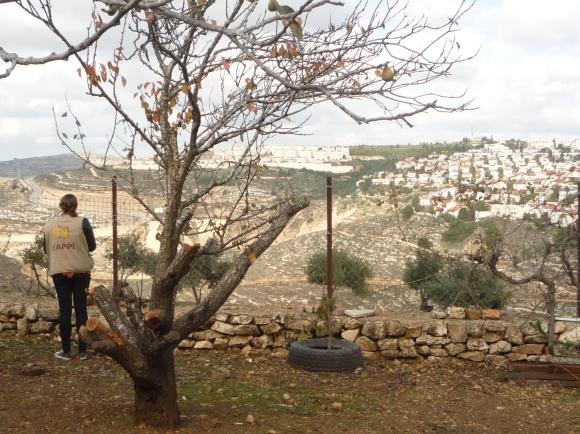 2.12.15. Al Khalayleh looking towards settlement Givat Ze'ev Photo EAPPI. K.Cargin