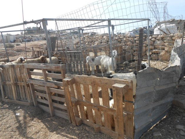 Shelters for housing sheep, goats and chickens have the same 'stop work' order and many animals may need to be moved quickly as bulldozers can turn up without warning. Photo:EAPPI/Liz