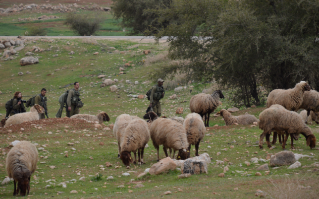 Israeli forces conducting a military exercise on land where Palestinians graze their sheep Photo:EAPPI/Eda