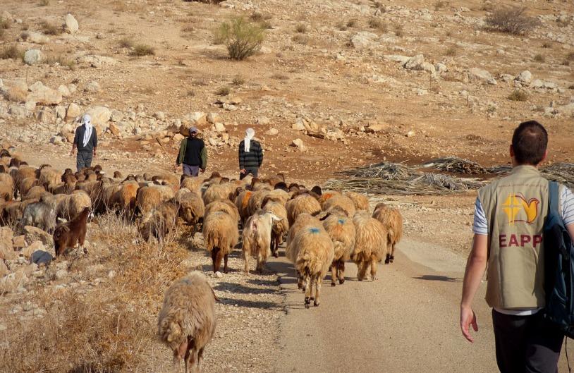 25-11-2017 EA Shepherding Khirbet Samra EAPPI EPritchard